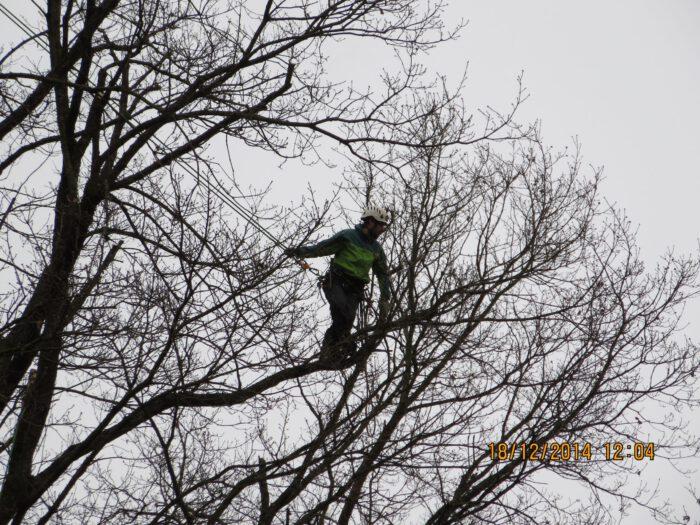 Seilklettertechnik für Baumpflege und Baumfällung in Stuttgart