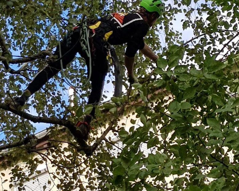 Baumpflege mithilfe von professioneller Seilklettertechnik