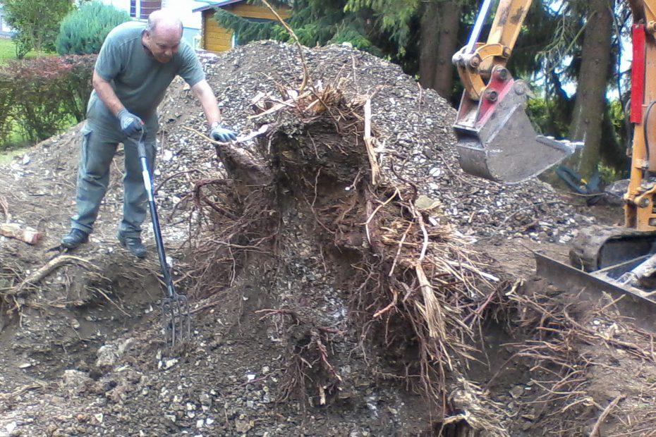 Baumfällung und Baumpflege sind unser Spezialgebiet